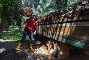 Sekatan India beri impak kecil terhadap sawit Malaysia -  Standard Chartered