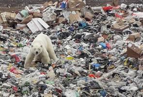 Beruang kutub ditemui lemah di tapak pelupusan sampah, diberi rawatan di zoo