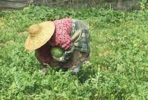 FAMA sedia bimbing petani, bantu keluar daripada kemiskinan