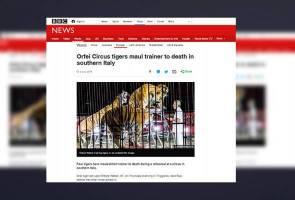 'Penjinak' tersohor Itali maut diserang empat ekor harimau semasa latihan sarkas