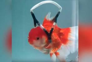Abah-abah dicipta buat ikan emas, ibarat mengguna kerusi roda