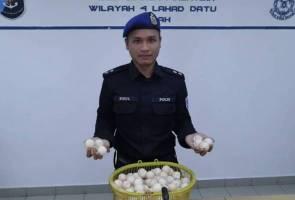 250 biji telur penyu bernilai RM500 dirampas di Sandakan