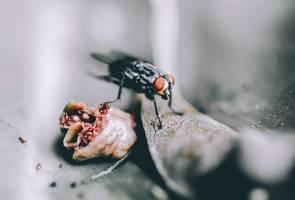 Wanita berang, rimas rumahnya 'diserang' ribuan lalat