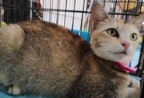 MCO: Jail, fine awaits those who neglect pets during 'balik kampung' period - Lawyers
