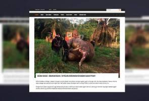 Gajah pygmy dibunuh kejam, 70 peluru ditemui dalam badan