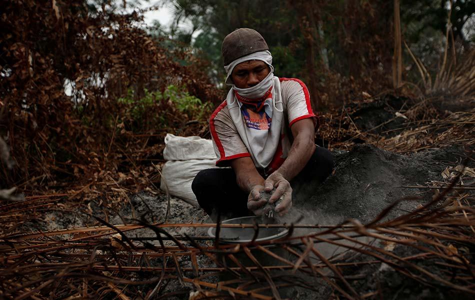 Masih ada yang berharap tentang survival kehidupan meskipun dalam kemusnahan. Seorang petani Muhammad Rasman, 51, mengumpul debu kebakaran untuk membaja tanamannya di daerah Sebangau, Palangkaraya, Kalimantan Tengah. - Reuters