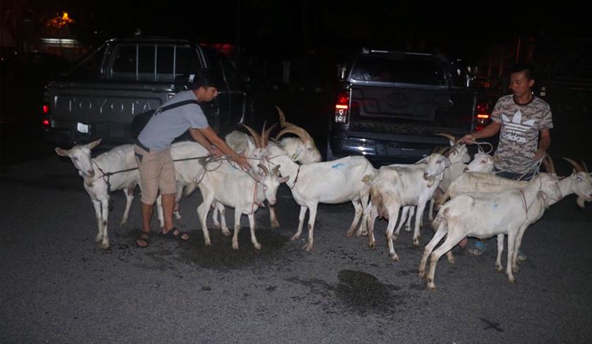 Dalam serbuan itu, polis berjaya merampas sebuah kenderaan jenis Hilux dan menemui semula 10 ekor kambing, kunci kereta, telefon bimbit dan wang tunai berjumlah RM700. - Foto PDRM