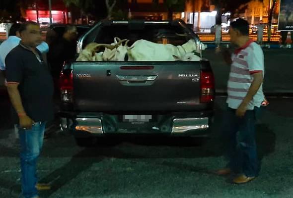 Suspek mengaku telah menjual 42 ekor kambing dengan anggaran hasil jualan sebanyak RM20,000 ke RM30,000. - Foto PDRM | Astro Awani