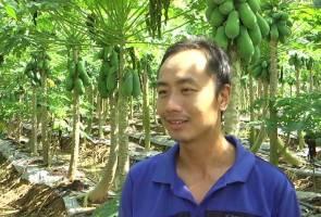 Graduan luar negara pilih jadi petani, tanam betik sekaki