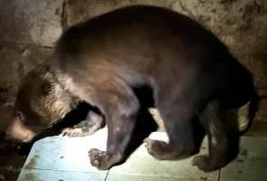 Polis Marin Sarawak selamatkan beruang madu dipelihara tanpa lesen