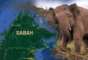 Gajah mati di Lahad Datu dipercayai akibat keracunan