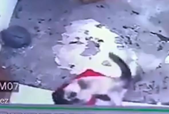 Seekor kucing Siam menjadi hero selepas menyelamatkan seorang kanak-kanak berusia setahun sebelum terjatuh dari tangga. | Astro Awani
