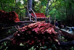 Dua warga asing diberkas bersama 4,000kg kulit kayu bakau