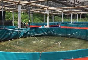 Apa kesan COVID-19 kepada industri akuakultur di Malaysia?