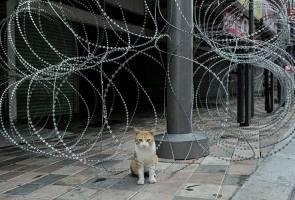 COVID-19: Anjing, kucing bukan penyebar virus kepada manusia - Jabatan Veterinar