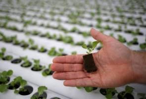 COVID-19: Rantaian bekalan makanan terjejas, aktiviti 'kebun bumbung' dipergiat
