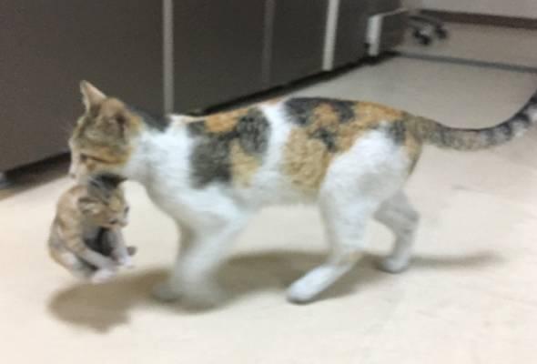 Kisah di sebalik gambar ibu kucing 'bawa' anak ke hospital