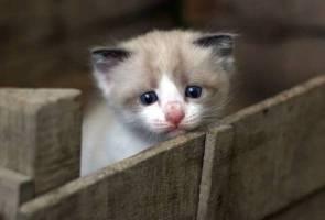 'Jangan bela kucing sewaktu PKP sahaja' - KKM