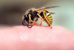 Apa perlu buat jika disengat tebuan? Ikuti langkah ini ketika terkena sengatan serangga berbisa