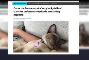 Kucing masih bernyawa selepas 12 minit 'dibilas' dalam mesin basuh
