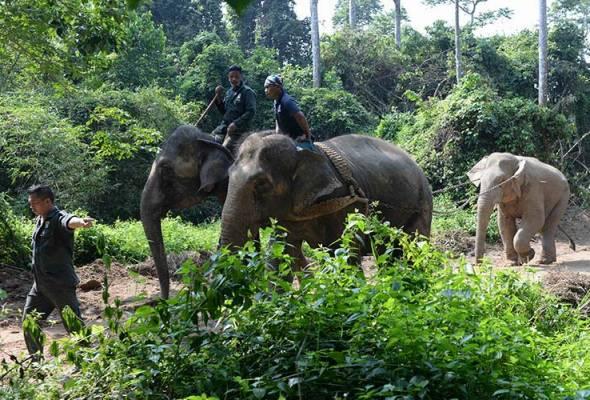 RMK-12: Santuari Gajah Perak bakal dibangunkan