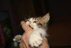 Warga emas meninggal dunia selepas dicakar, dijilat kucing peliharaan