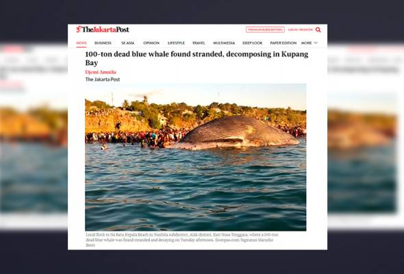Bangkai paus 100 tan ditemukan terdampar