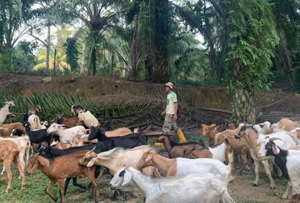 RM34 juta untuk petani, pekebun, penternak dan nelayan Sabah
