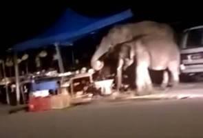Tiga kali gajah 'singgah' di gerai - Peniaga buah