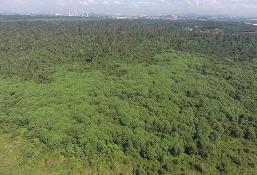Hutan Simpan Kuala Langat Utara (HSKLU), Selangor merupakan hutan gambut seluas 960 hektar dan habitat kepada pelbagai spesis hidupan. - Foto: GEC/Facebook